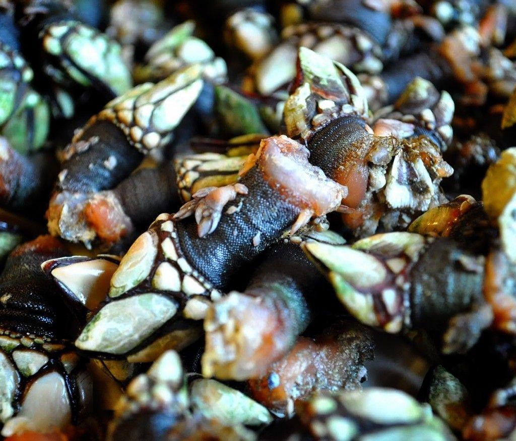 Cocer el marisco - Percebes