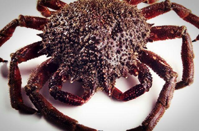 Cocer el marisco - Centolla