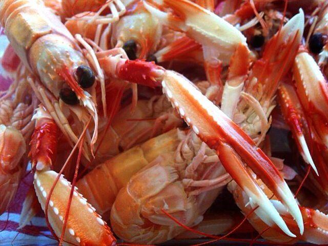 Cocer el marisco - Cigalas