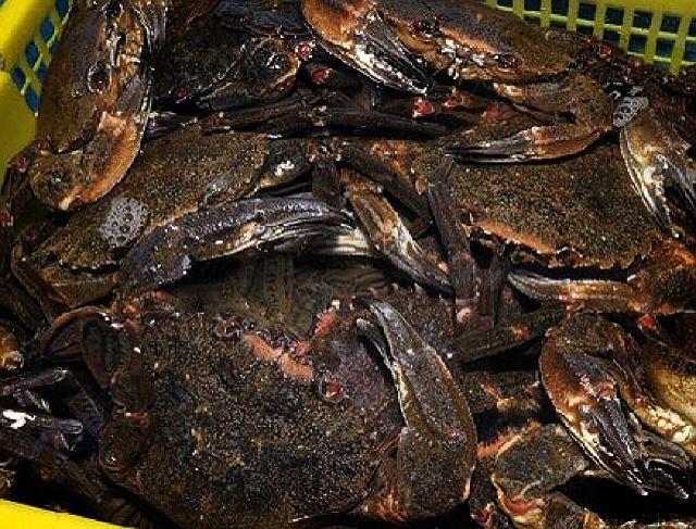 Cocer el marisco - Nécoras